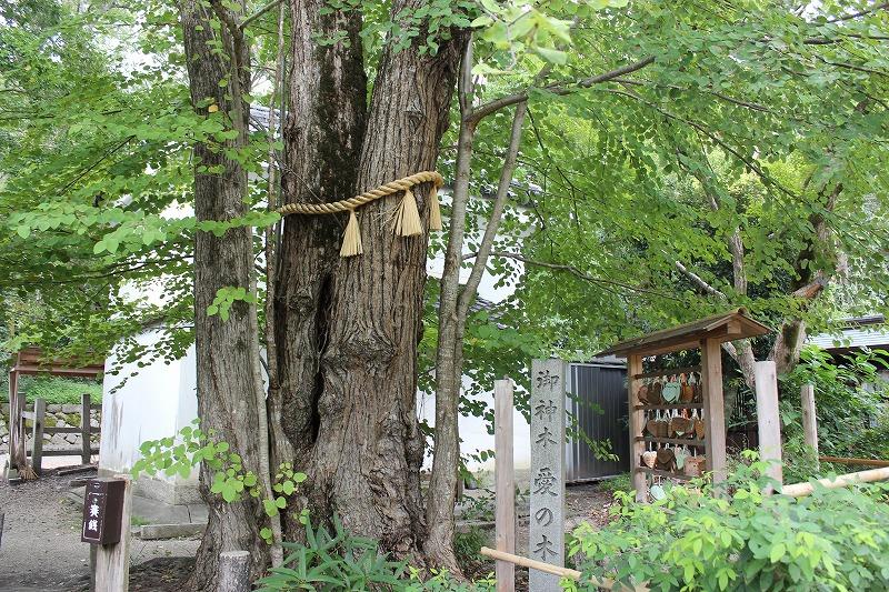 梨木神社 愛の木