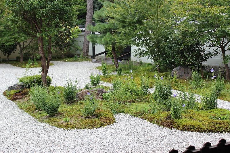 廬山寺 桔梗の花