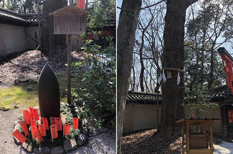 京都 河合神社 ご神木
