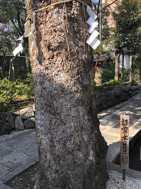 京都 大将軍八神社 招霊ノ木