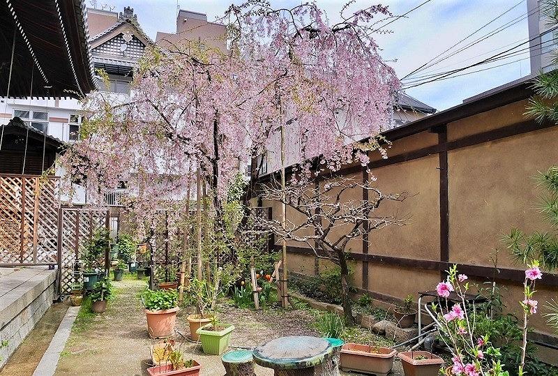 京都 佛光寺 中庭