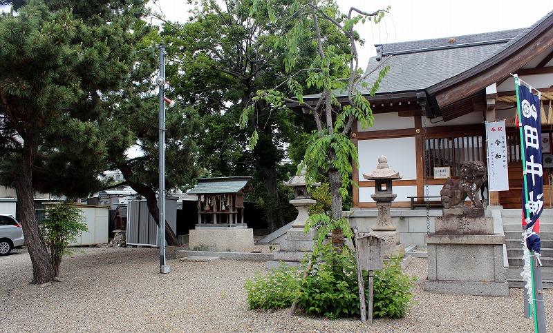 京都 田中神社 垂れ桜の木